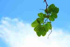 leaves-15757_960_720