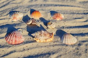 mussels-3158991_1280 (1)